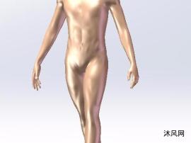 男士人体模型